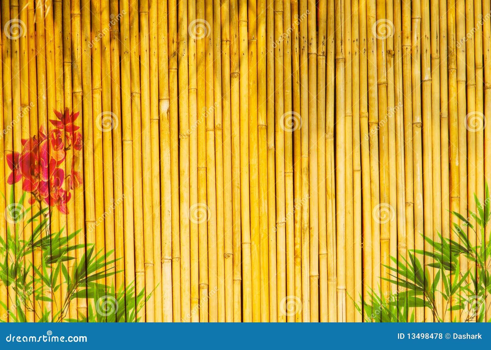 bamboo background nineteen photo - photo #25