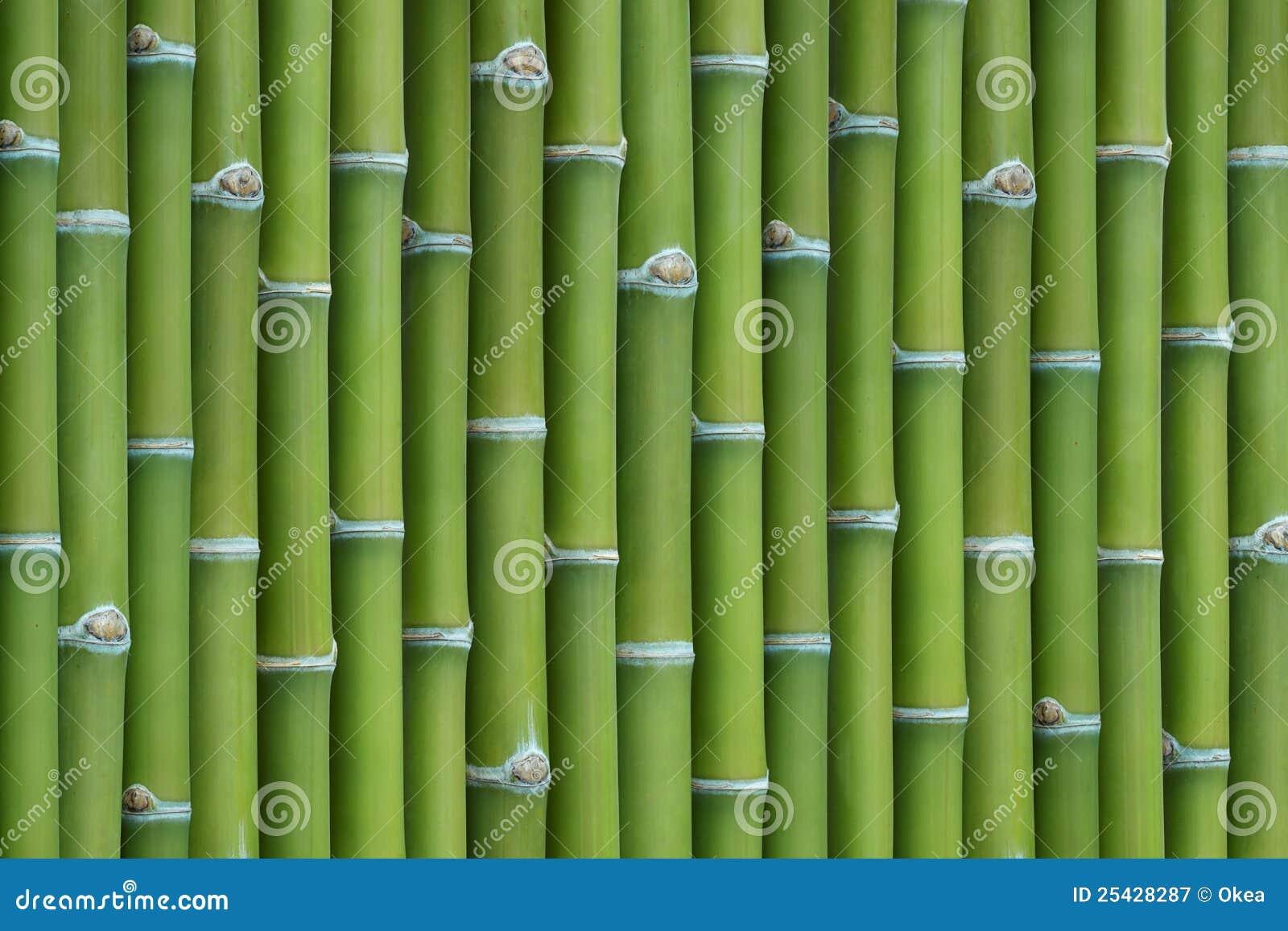 Bamboo background vector illustration cartoondealer