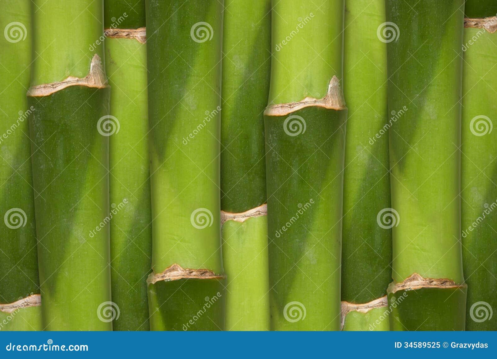 Bamboo background royalty free stock photo image