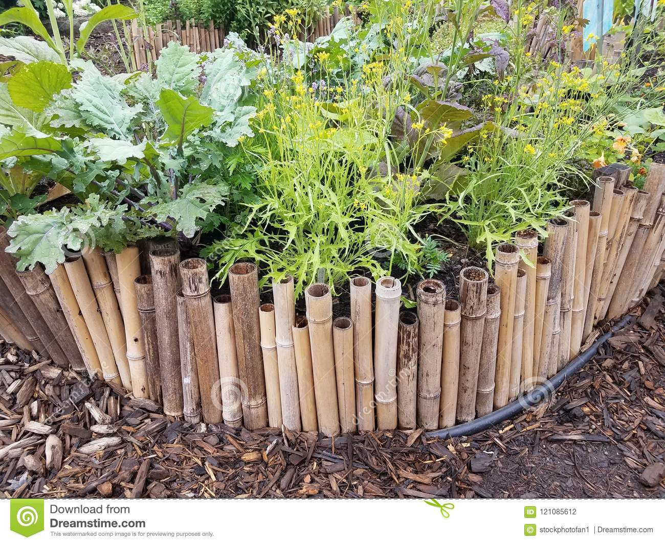 Bamboo Border And Wood Chips With Green Plants Stock Photo Image