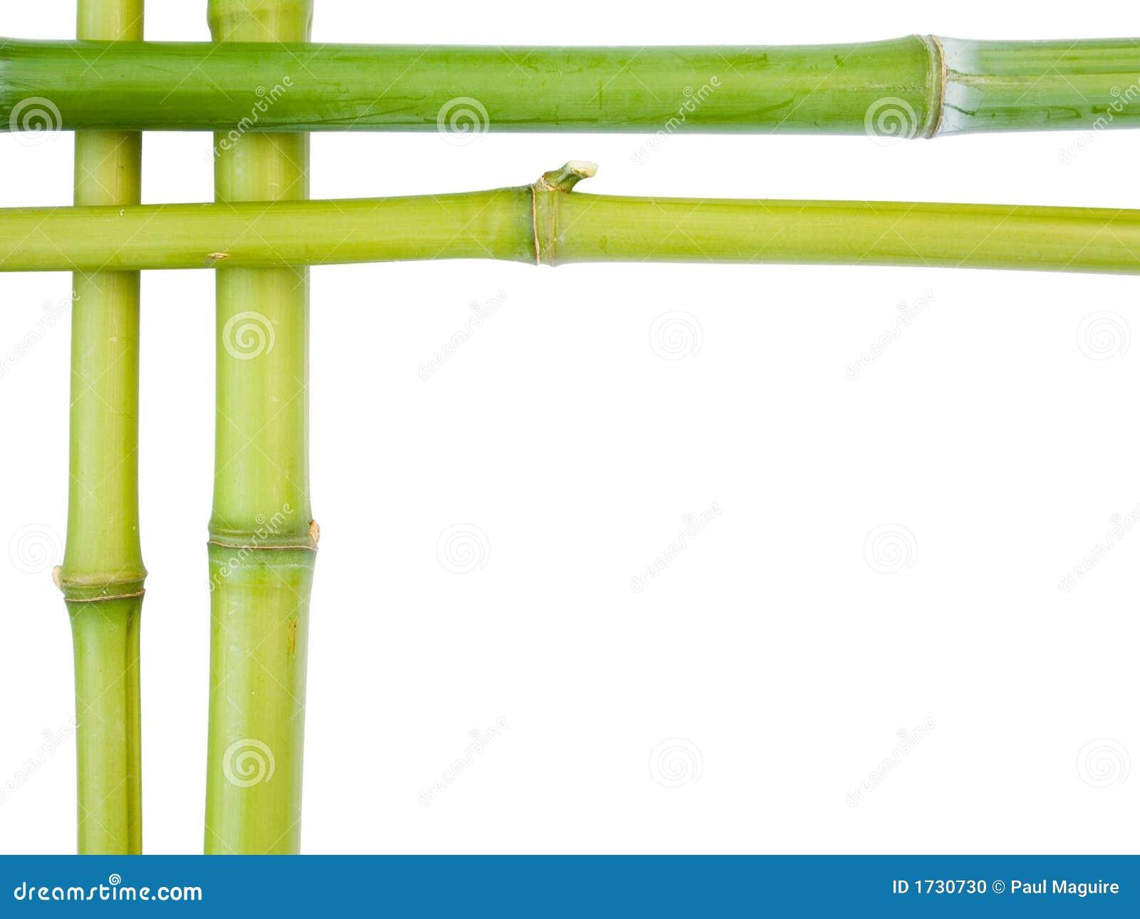 Bamboo borders