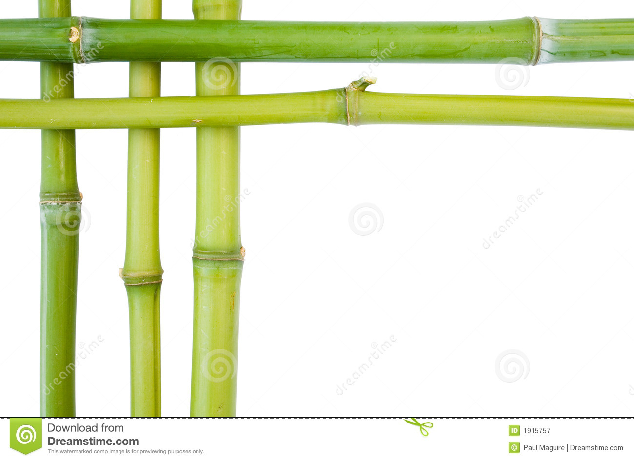 Bamboo borders to top and left on a white background with space for ...