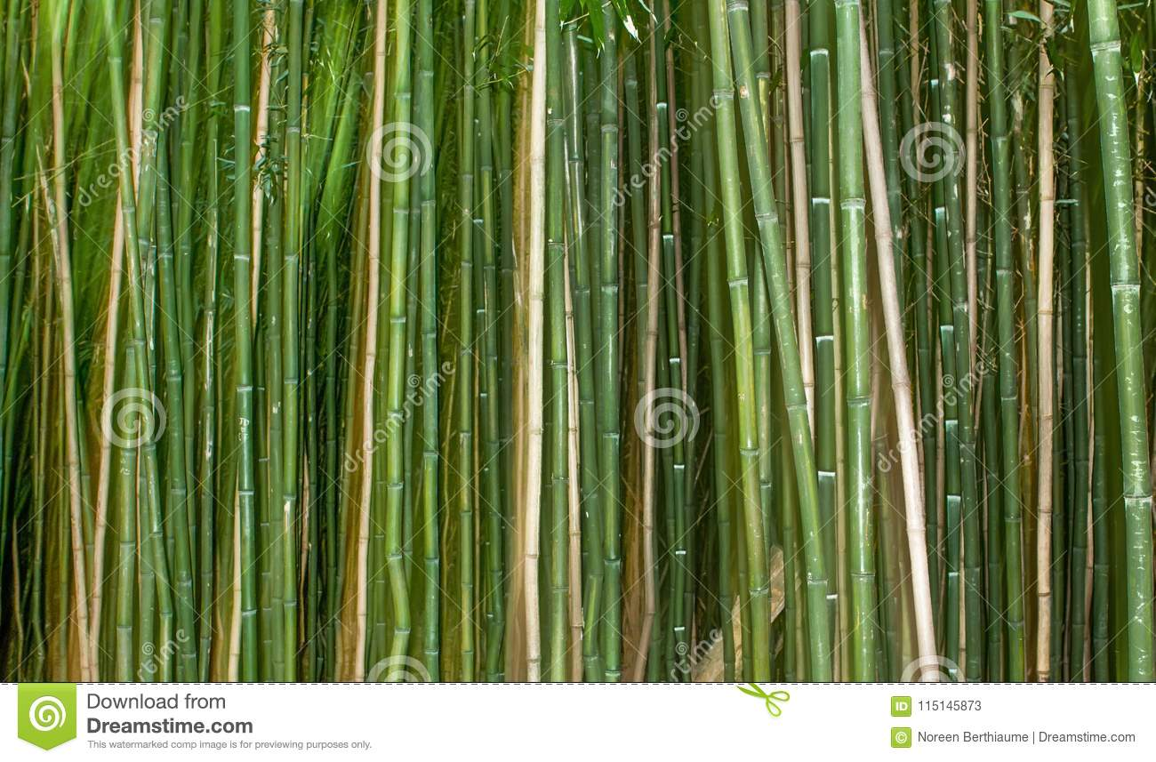 ed22fc98328e Bamboo Canes Background With Green Stock Image - Image of banner ...