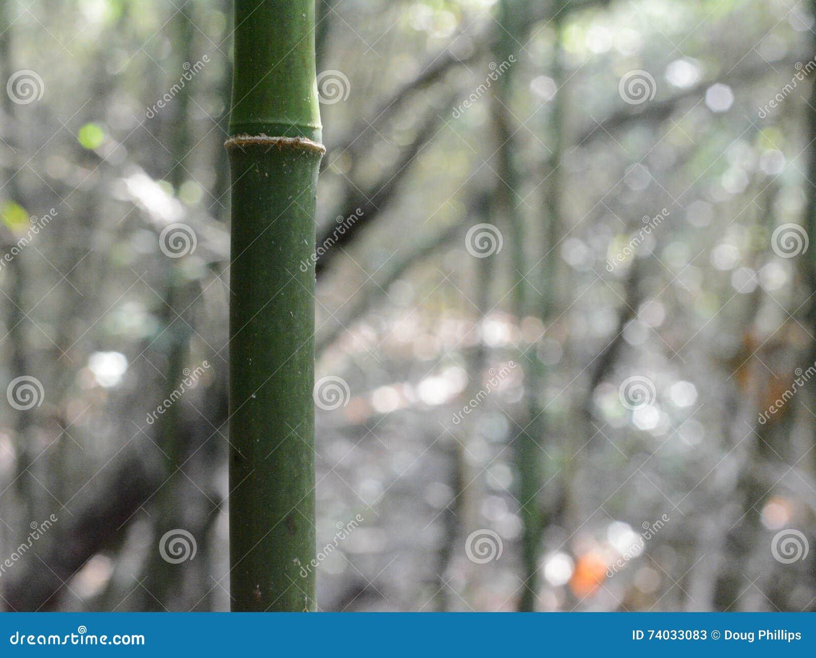 Bamboo Close Up