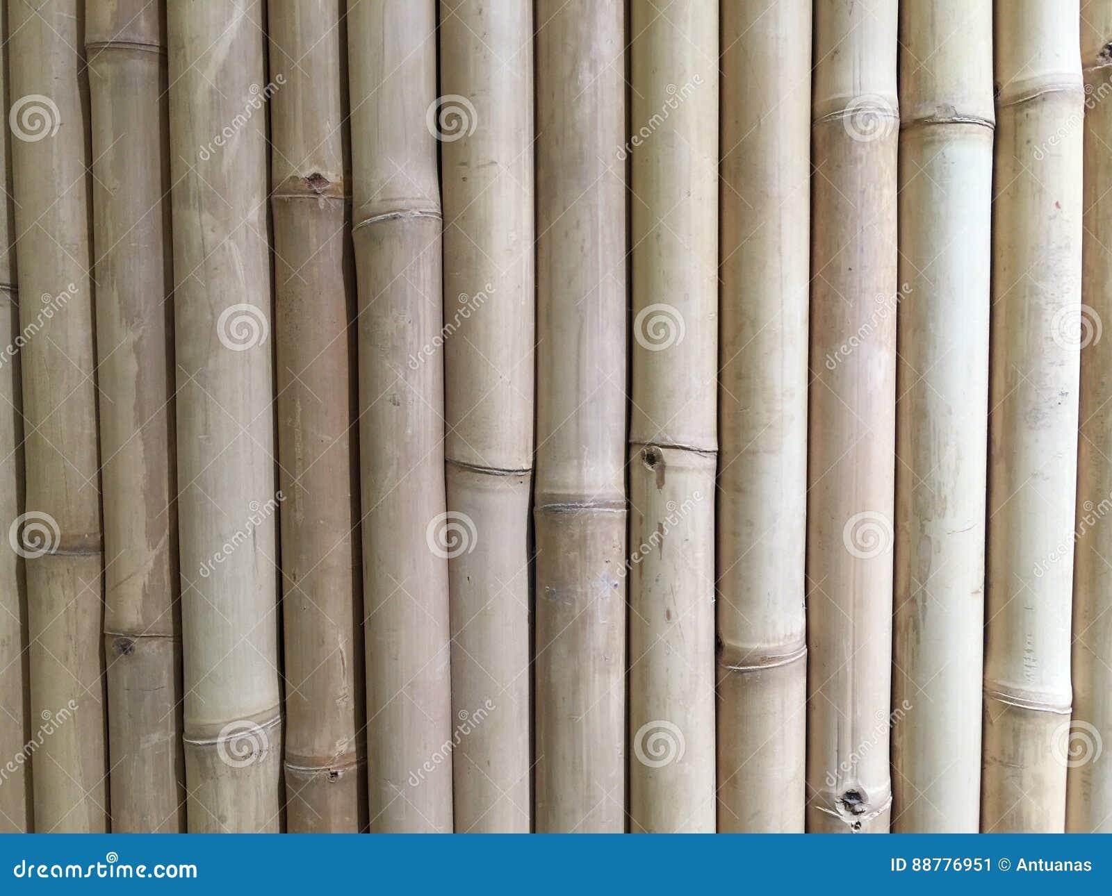 Bamboo exture