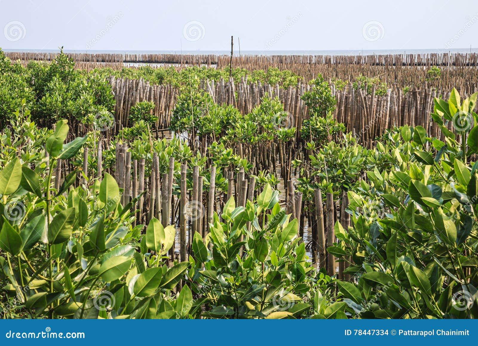 Bamboo Fence Protect Sandbank From Sea Wave Stock Photo - Image of