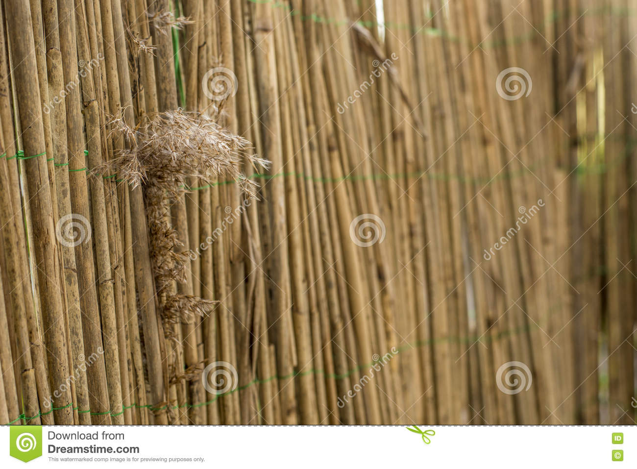 Bamboo Fence With Reed