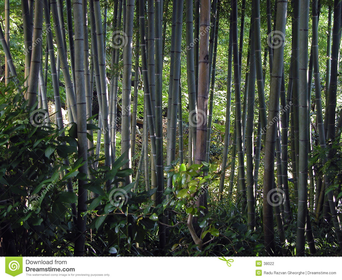 Download Bamboo forest stock photo. Image of bamboo, wildlife, exploring - 38022