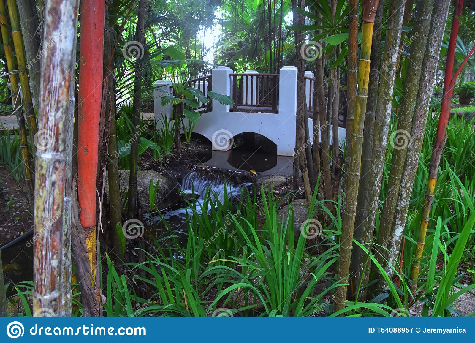 Bamboo Forest Background Multi Color Bright Red Gree Orange Yellow Bamboo Plant Bamboo Trees In Wood On Resort In Phuket Tha Stock Image Image Of Green Bright 164088957