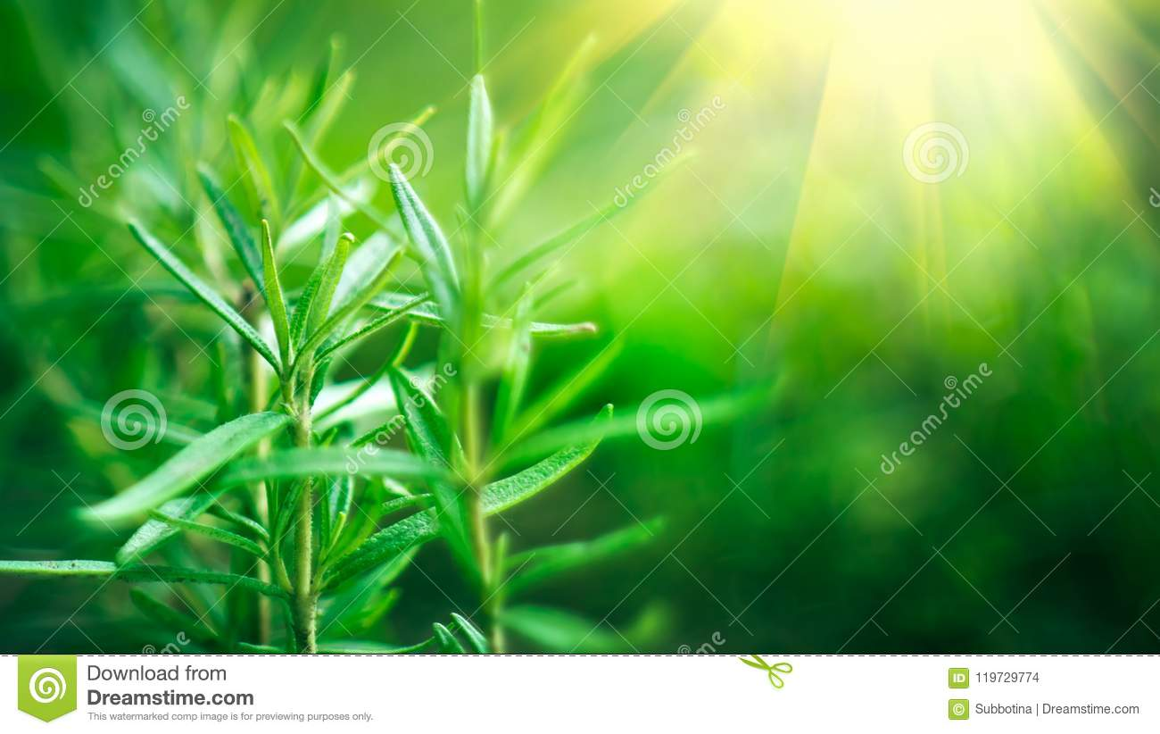Bamboo forest. Growing bamboo border design over blurred sunny background