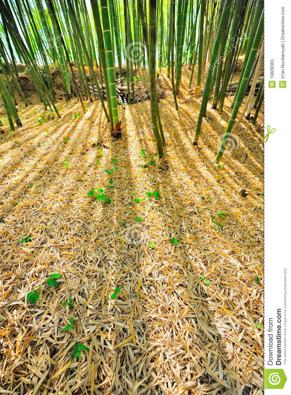 bamboo forest mulch humus royalty free stock photo - image: 19608365