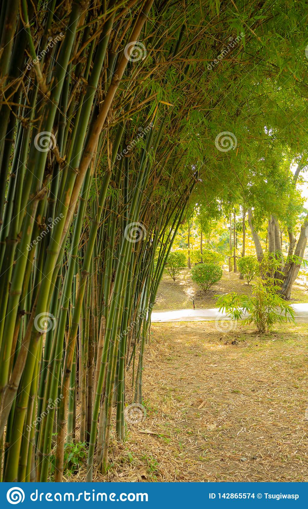 Bamboo forest with natural light in garden