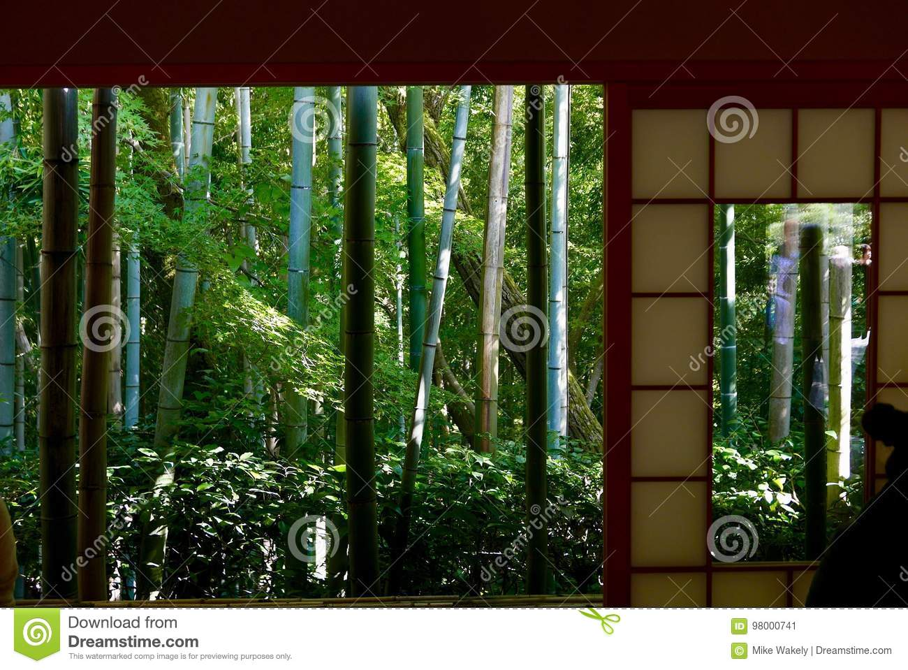 Bamboo forest view from tea house
