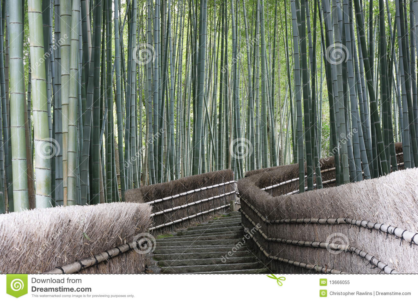 Bamboo Forest Walk,