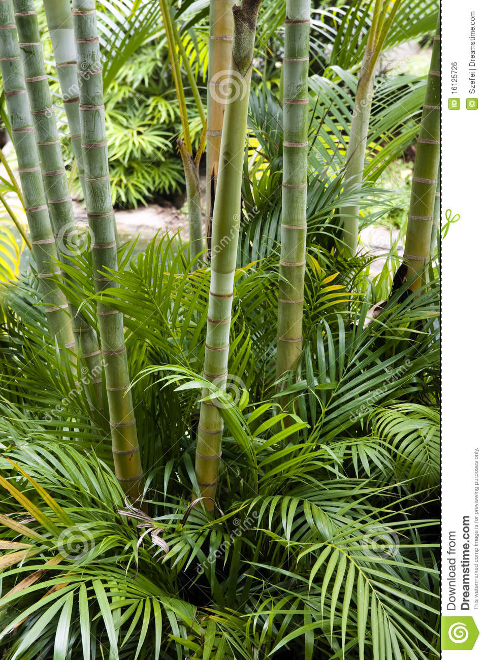 Bamboo Garden Royalty Free Stock Image Image 16125726