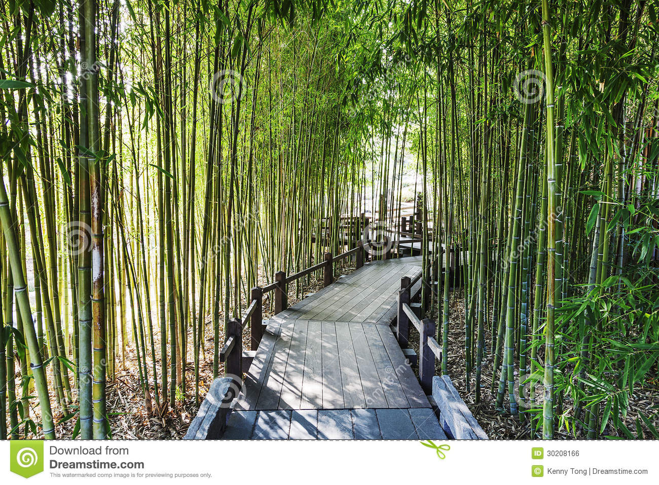 Bamboo Garden Royalty Free Stock Image - Image: 30208166