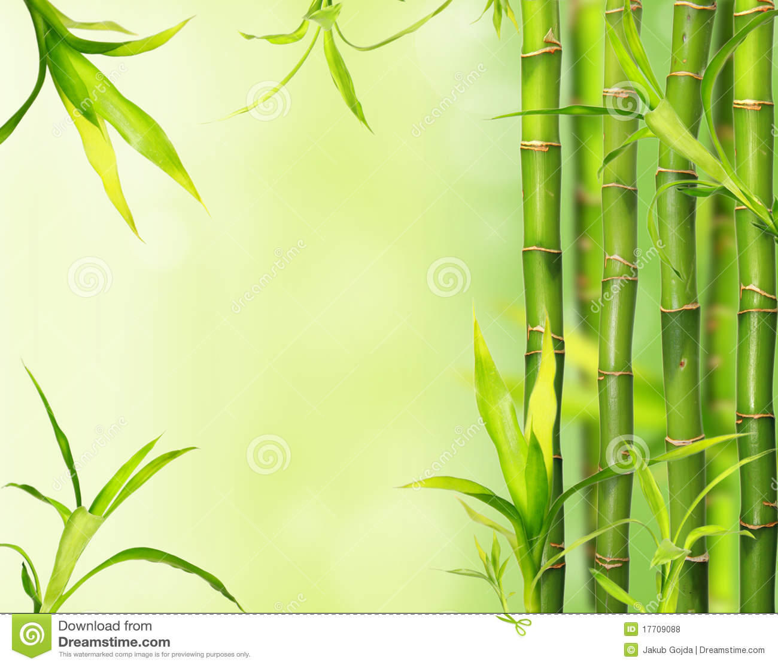 Bamboo Jungle Background Royalty Free Stock Photos Image