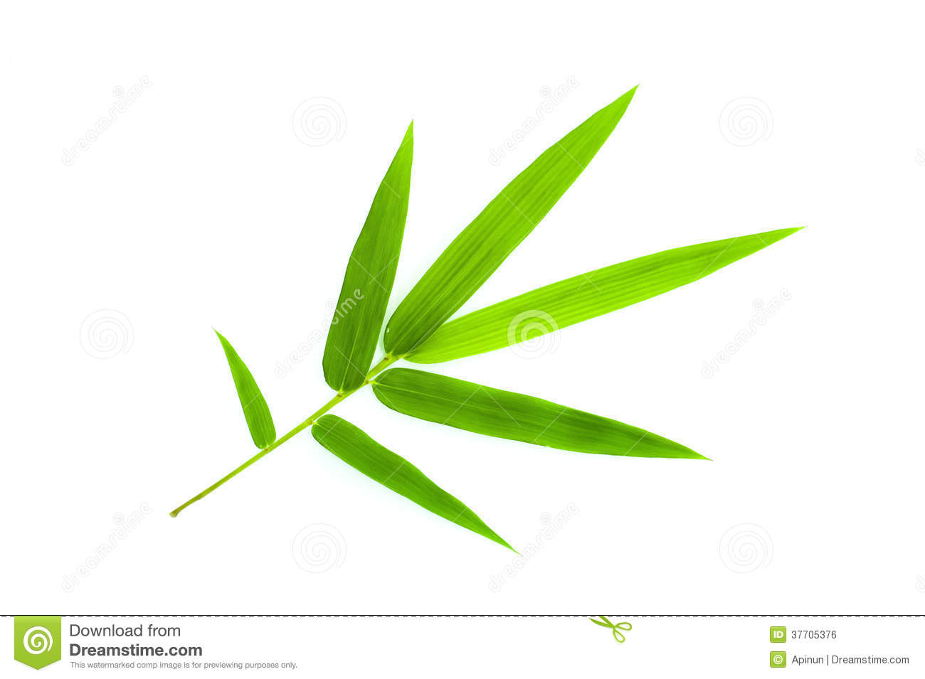 bamboo leaf stock photo image of flora  botany  bright free march clip art border free march clip art pictures