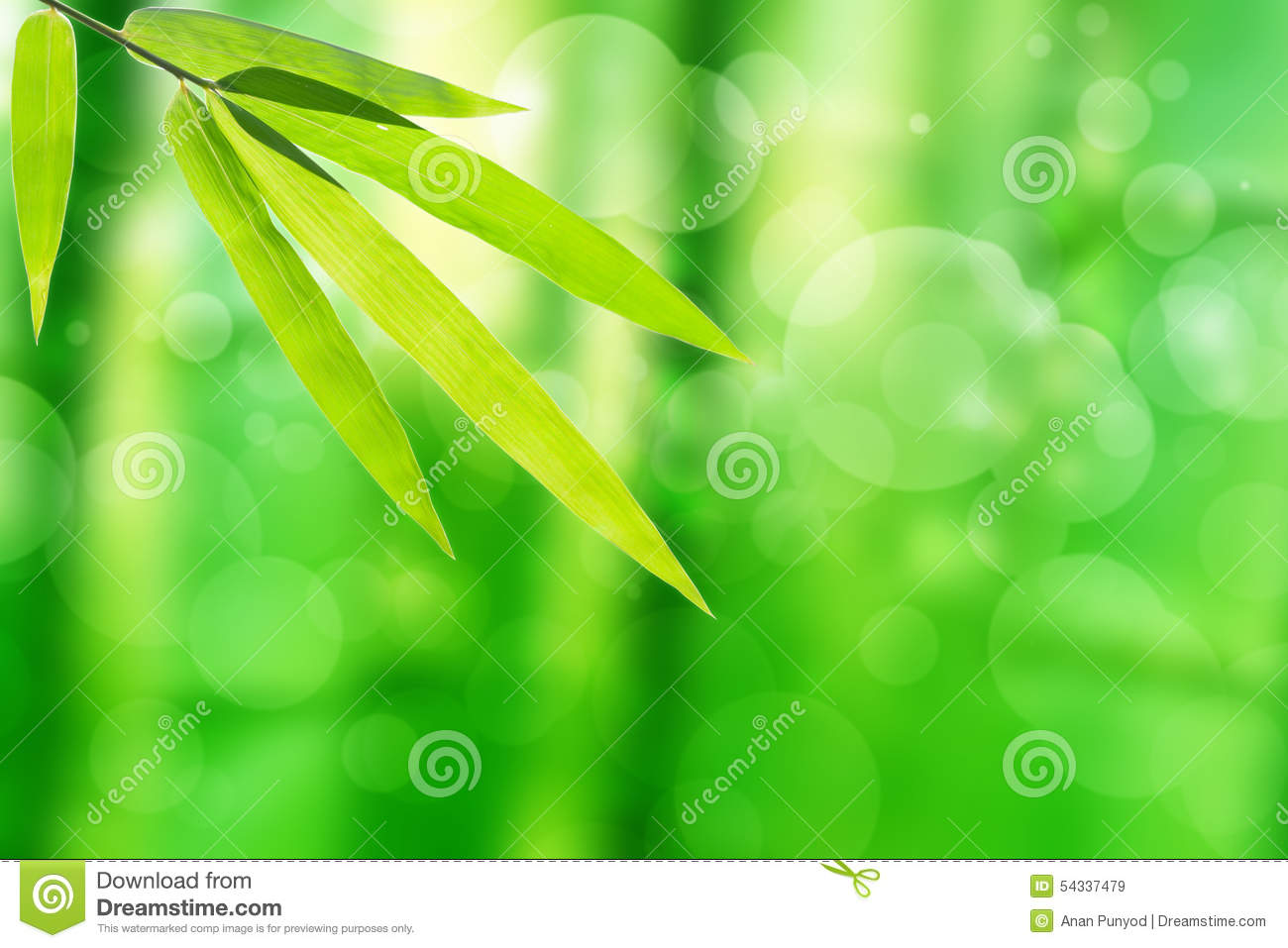 Bamboo leaf and abstract green tree background bokeh
