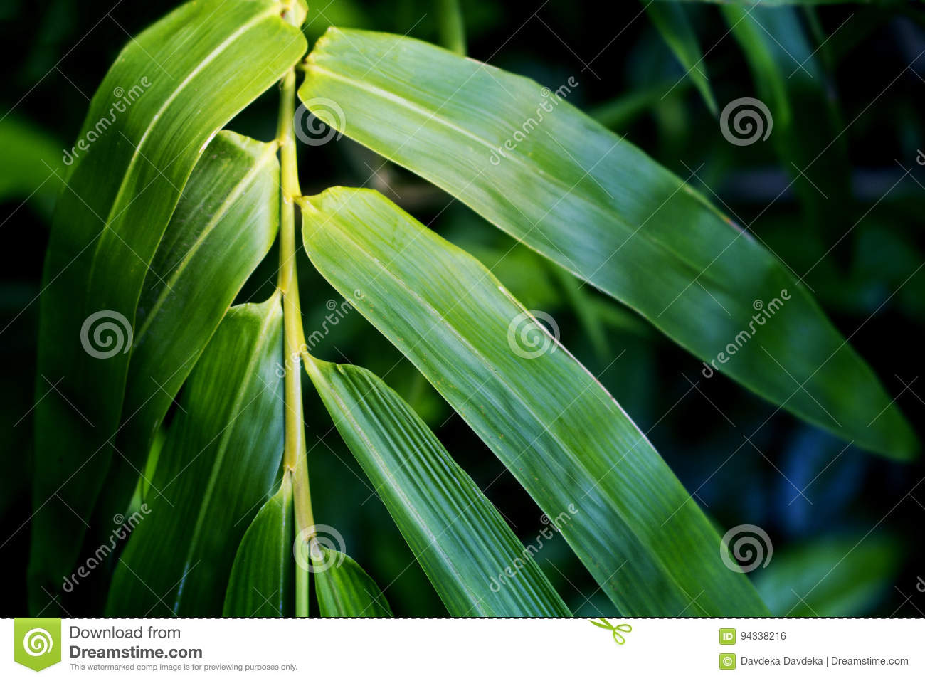Bamboo Leaf Toned Photo For Spa Salon Design Meditation Wallpaper Zen Poster Stock Photo Image Of Growth Background 94338216
