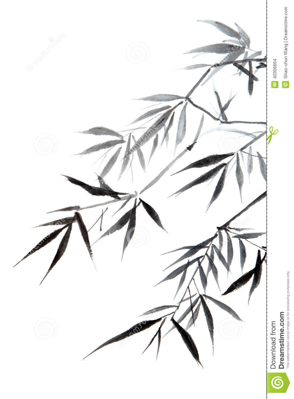 Bamboo Leaf Stock Illustration Image 40306664