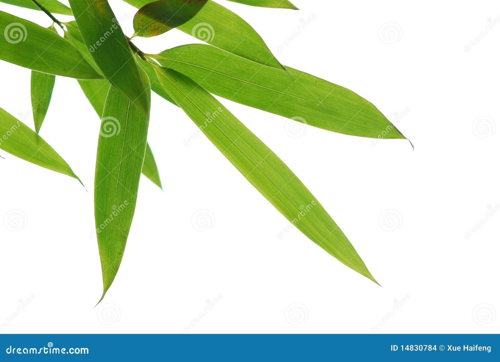 Bamboo leafs