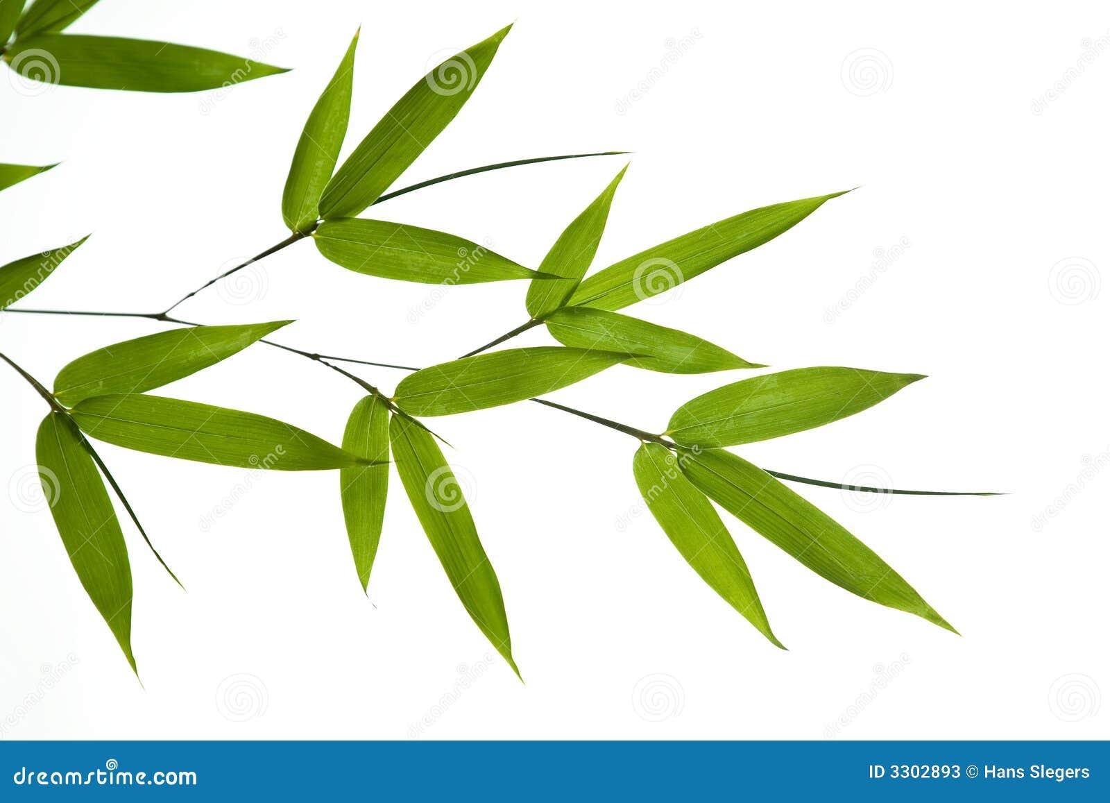 Рисунок листа бамбука