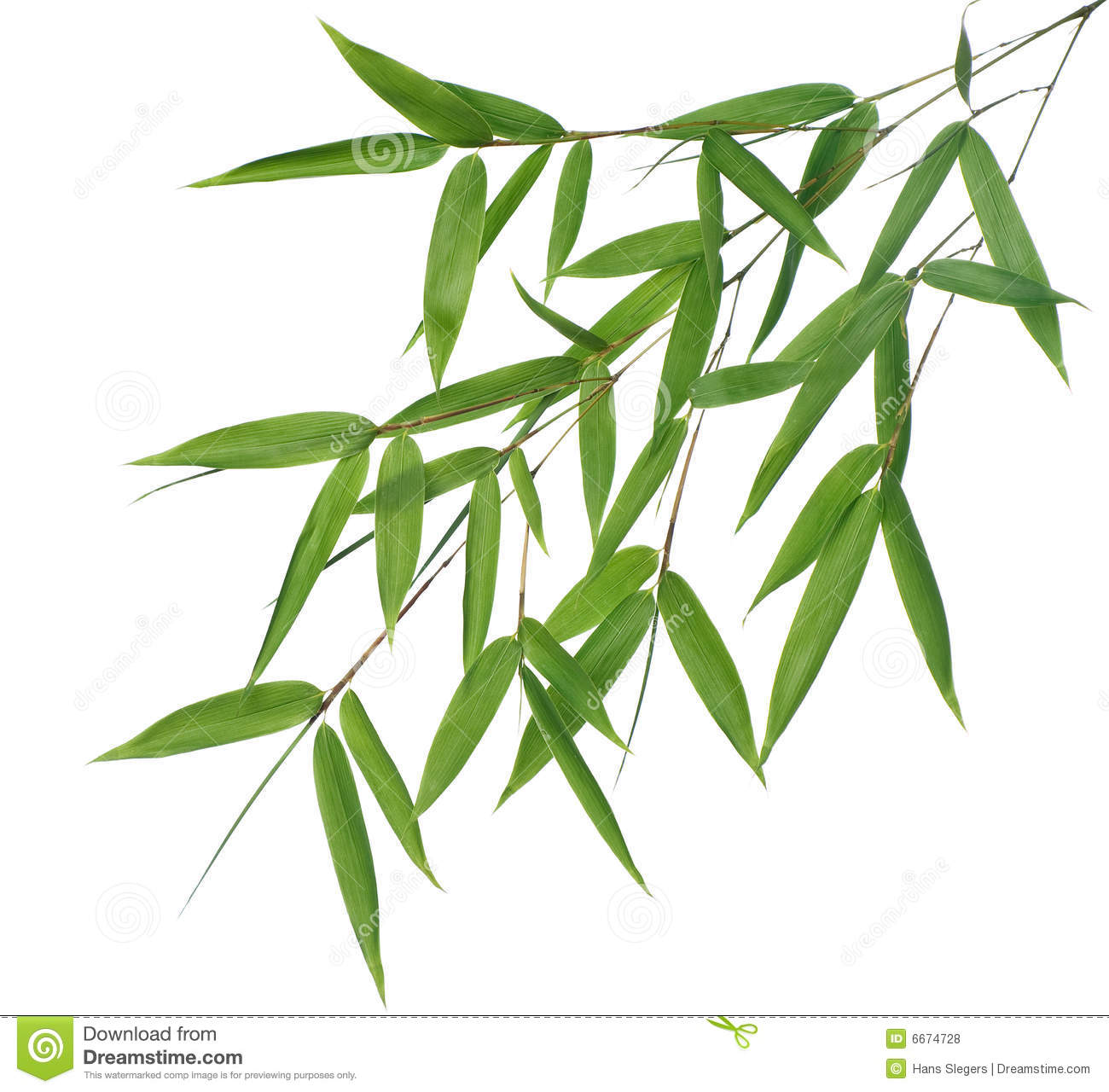 High resolution image of wet bamboo-leaves isolated on a white ...
