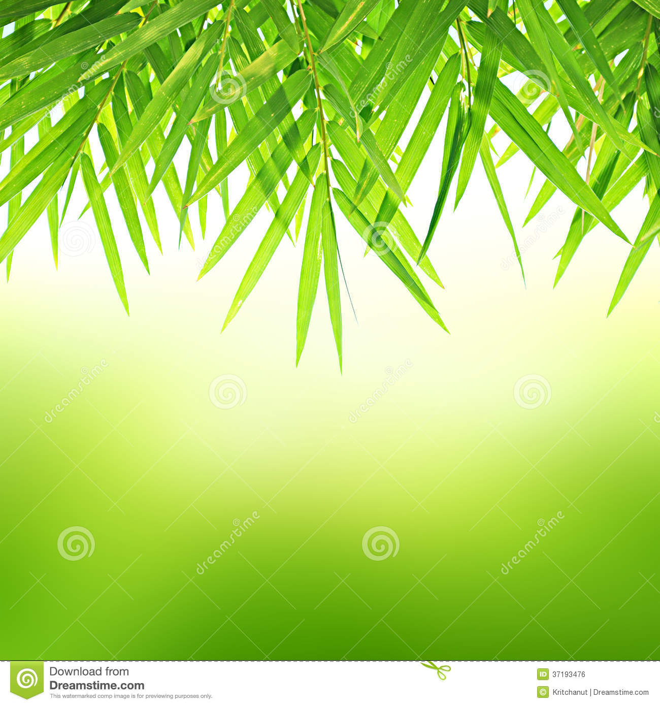 ��bamboo leaves on green background royalty free stock