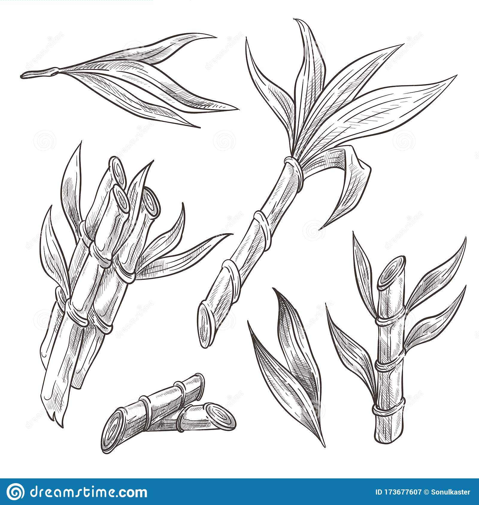 Bamboo Logs With Leaves Hand Drawn Sketch Illustrations Set Stock Vector Illustration Of Japanese Design 173677607