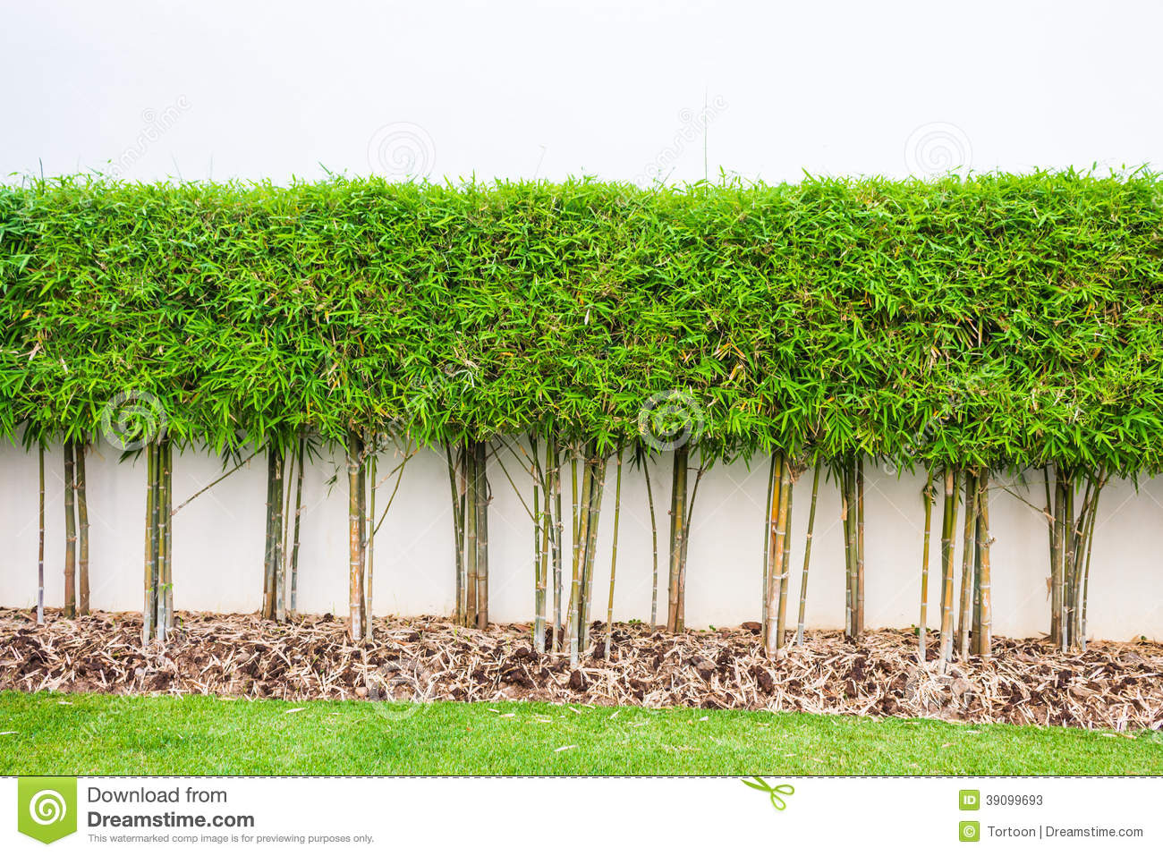 Bamboo plant and green grass wall background stock photo for Bamboo garden