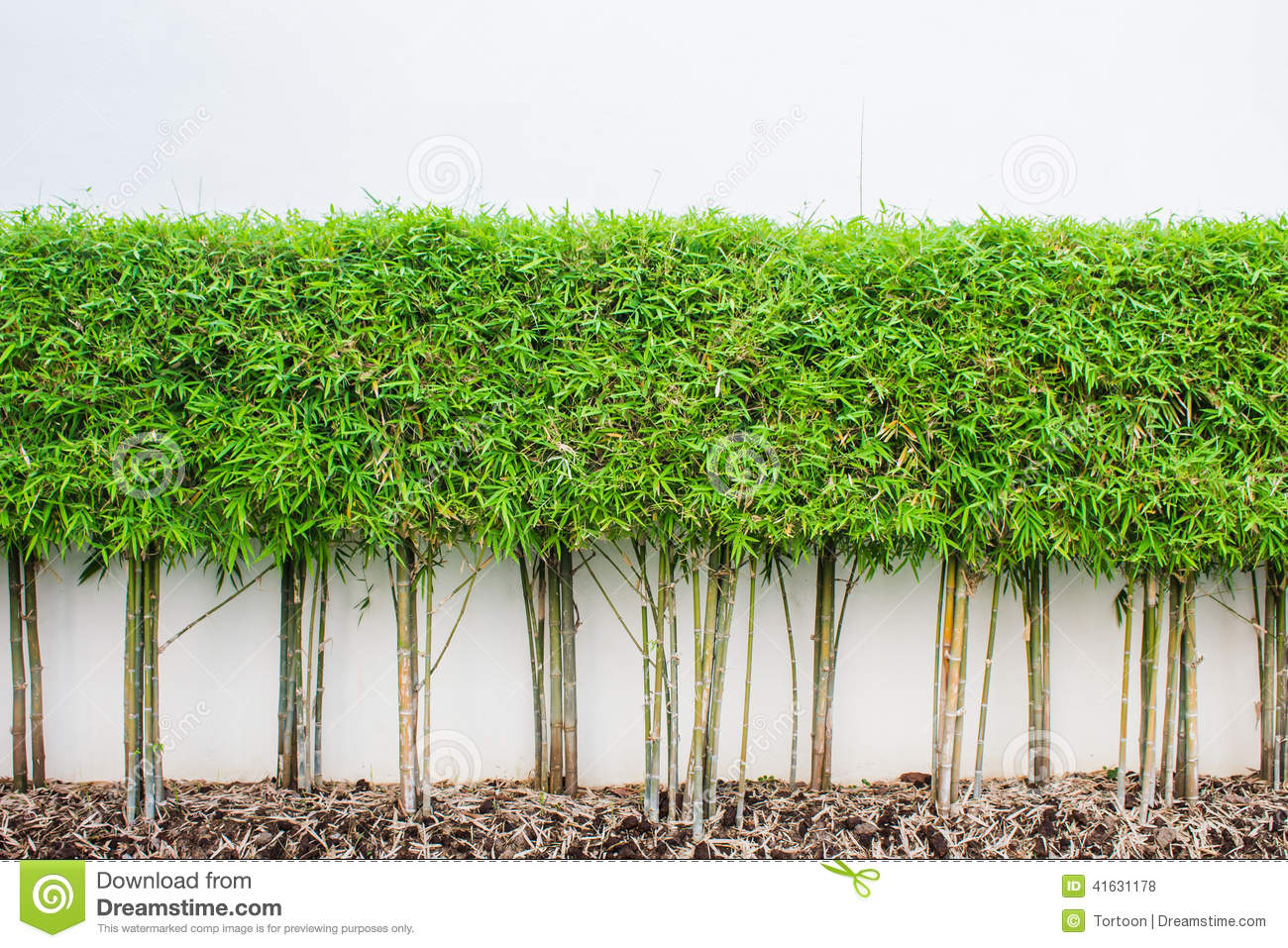 Bamboo plant and green grass wall background stock photo for Green plants for garden