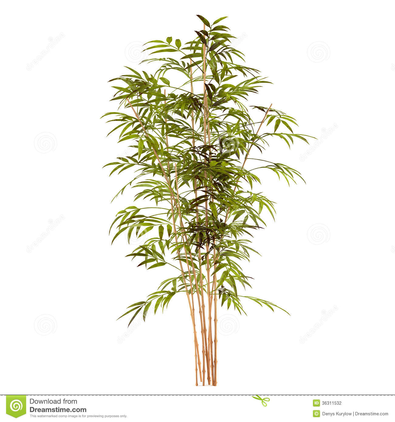 palm spring map with Stock Photography Bamboo Plant White Background Image36311532 on Stock Photography Bamboo Plant White Background Image36311532 furthermore Tortuga Sunfest Get Ready Music Festival Season Spring besides Dominican Republic Beaches further LocationPhotoDirectLink G147249 D299788 I27301876 Marriott s Aruba Surf Club Palm Eagle Beach Aruba likewise Alice Springs Holidays Nt.