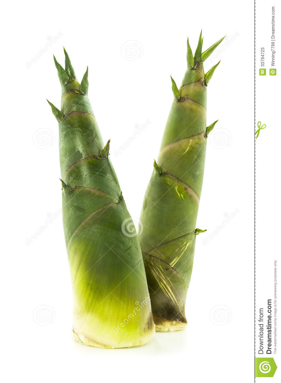 Bamboo Shoot Stock Photos - Image: 33794723