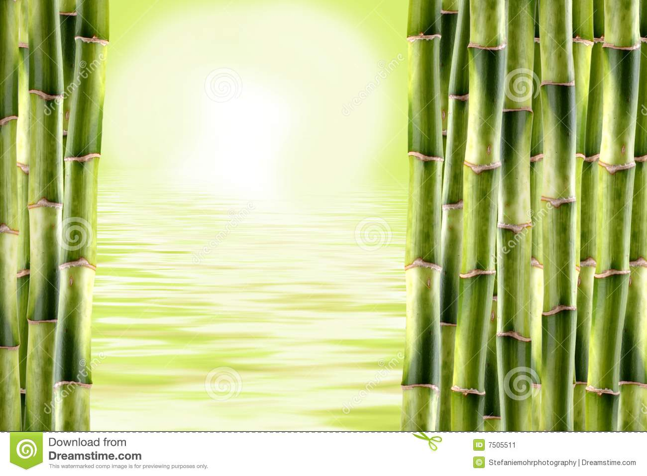 how to grow bamboo shoots