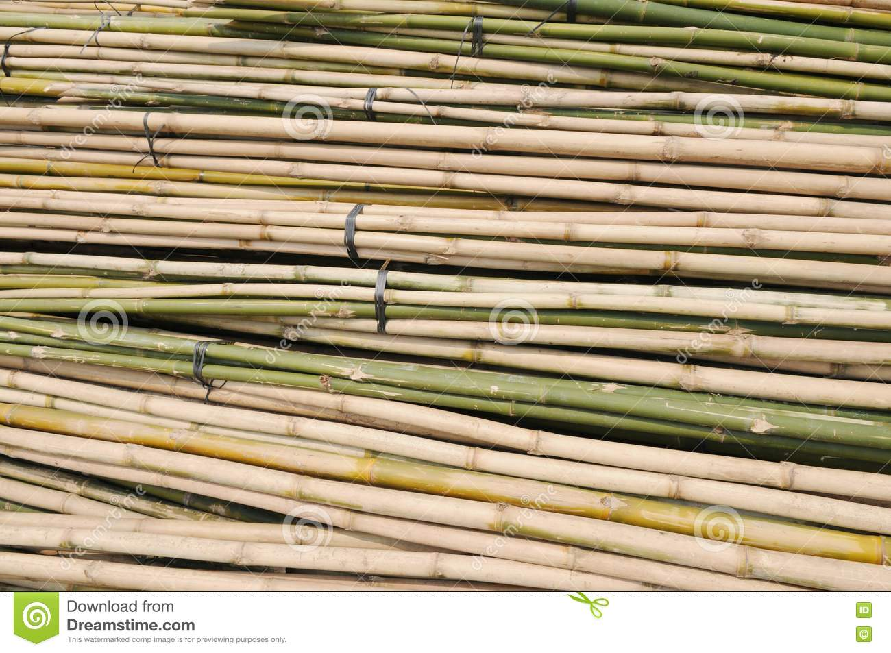 how to grow bamboo from a stalk