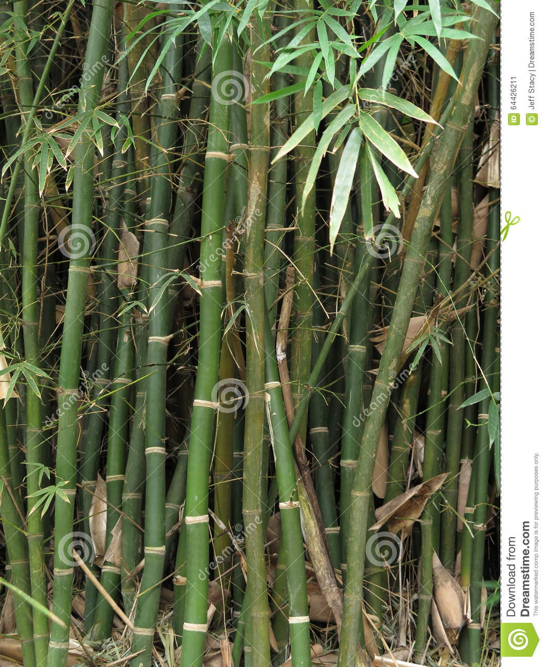 bamboo stalks and leaves stock photo image 64426211