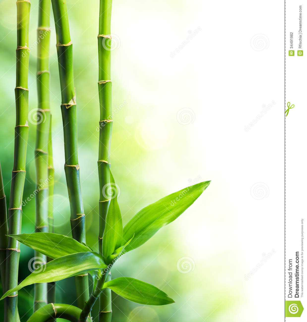 Bamboo Stalks And Ligh...