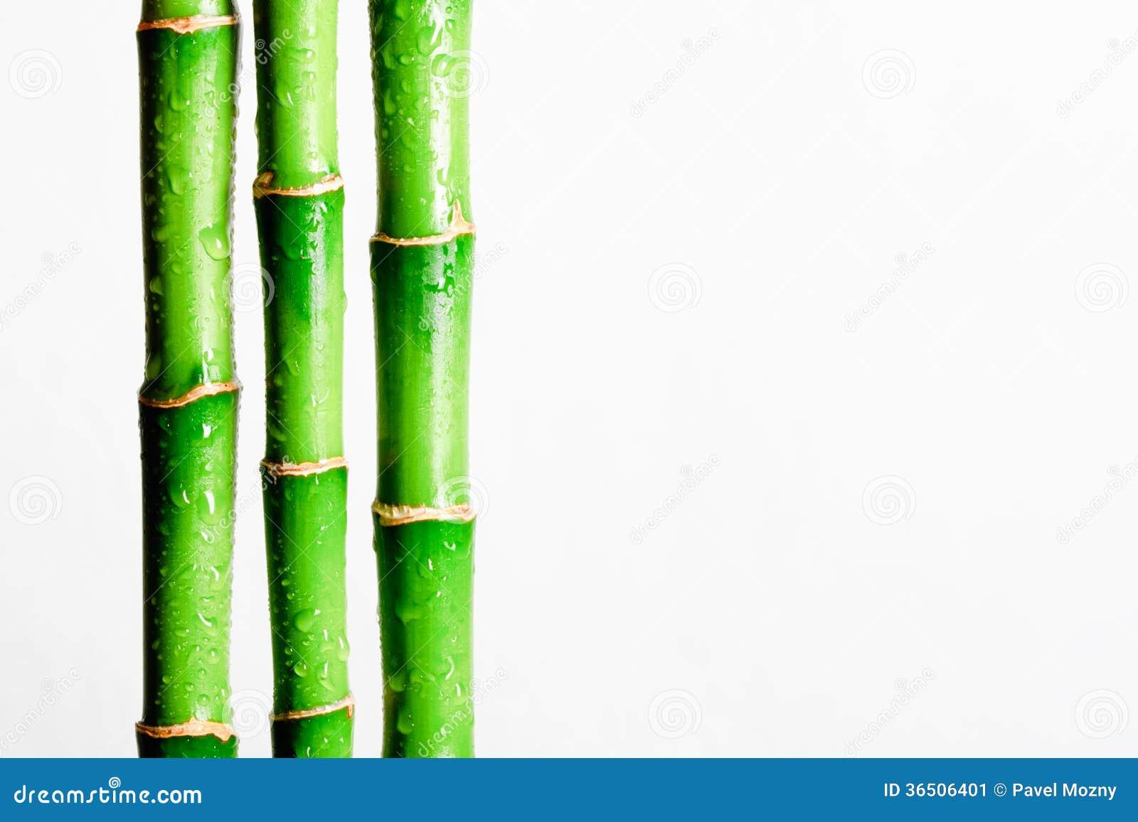 Cartoon Bamboo Stick ~ Bamboo stick stock photo cartoondealer