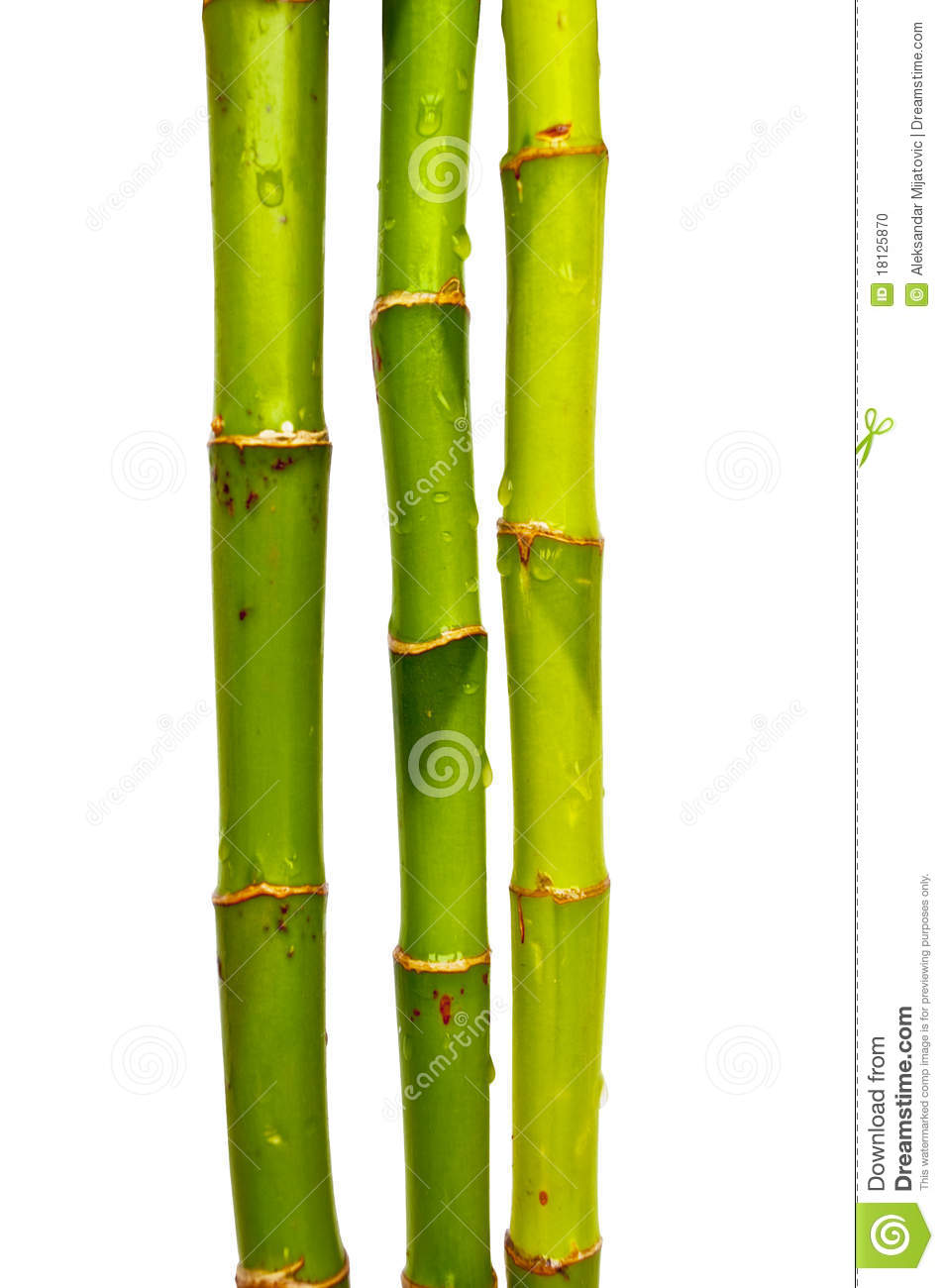 Bamboo sticks stock photo image