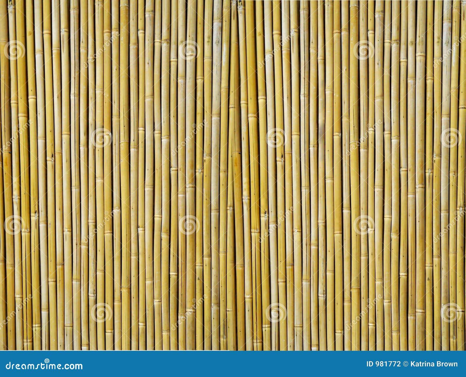 Bamboo Textured Background Stock Photo Image Of Closeup