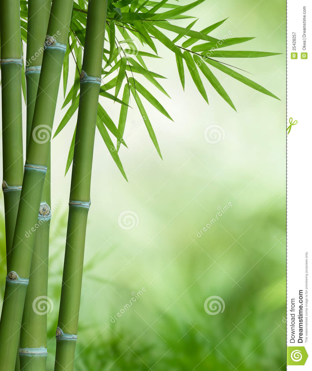 bamboo tree with leaves stock image image of nature. Black Bedroom Furniture Sets. Home Design Ideas