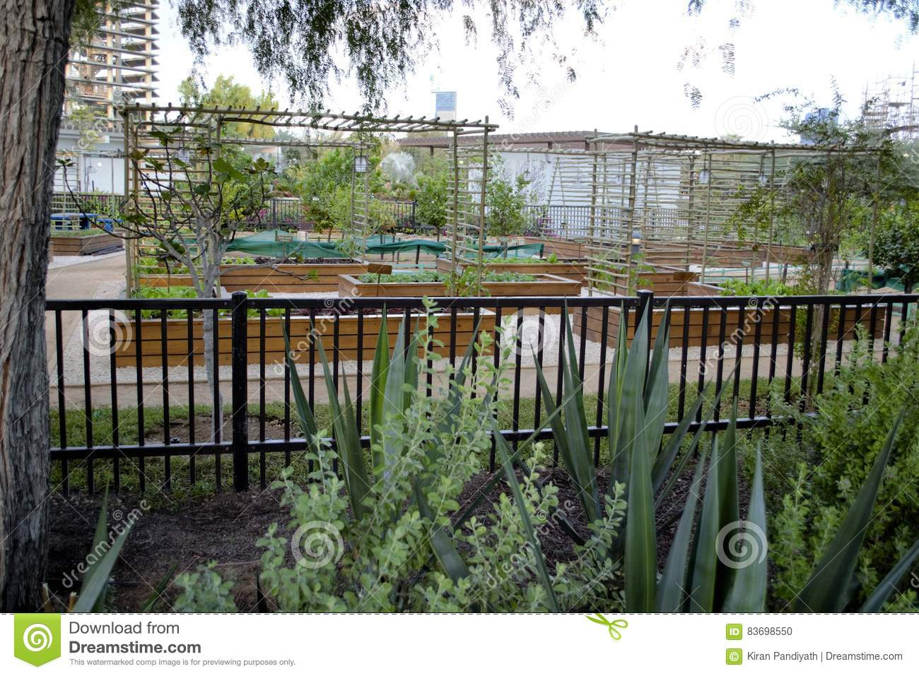 Download Bamboo Trellis Black Garden Fence Stock Photo   Image Of Fence,  Trellis: 83698550