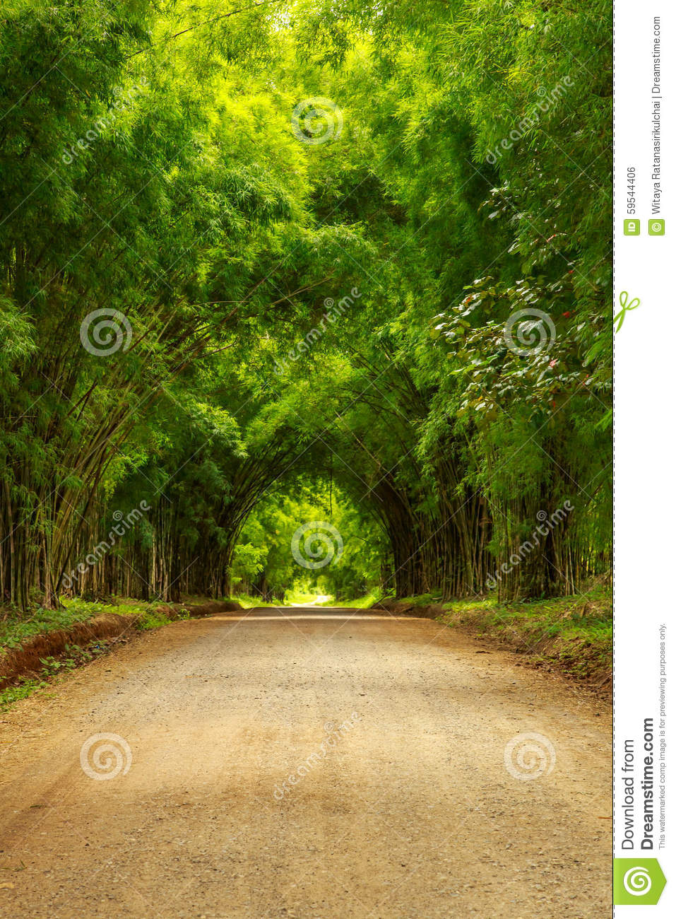 bamboo tunnel scenery background stock photo - image of japan