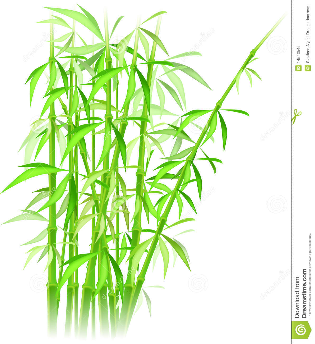 Bamboo online dating