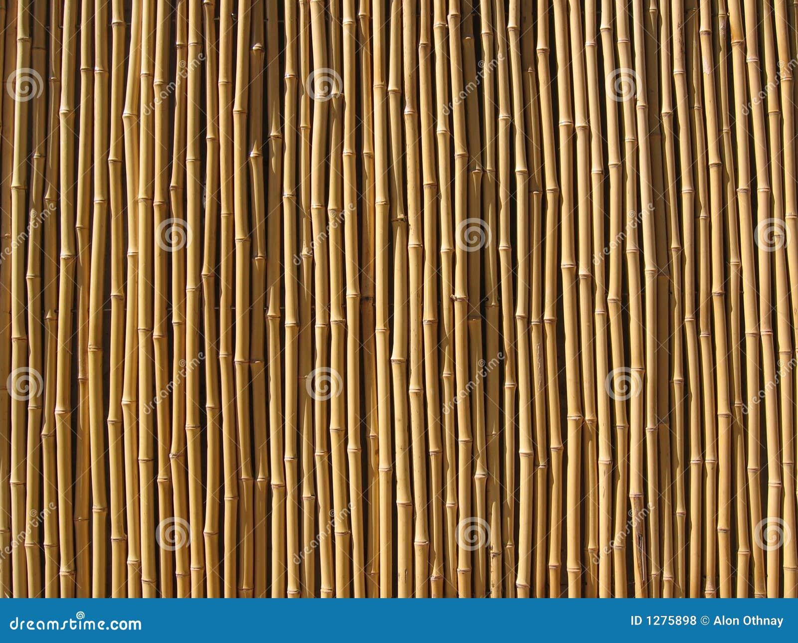Bamboo wall stock photo image of blur jungle stick