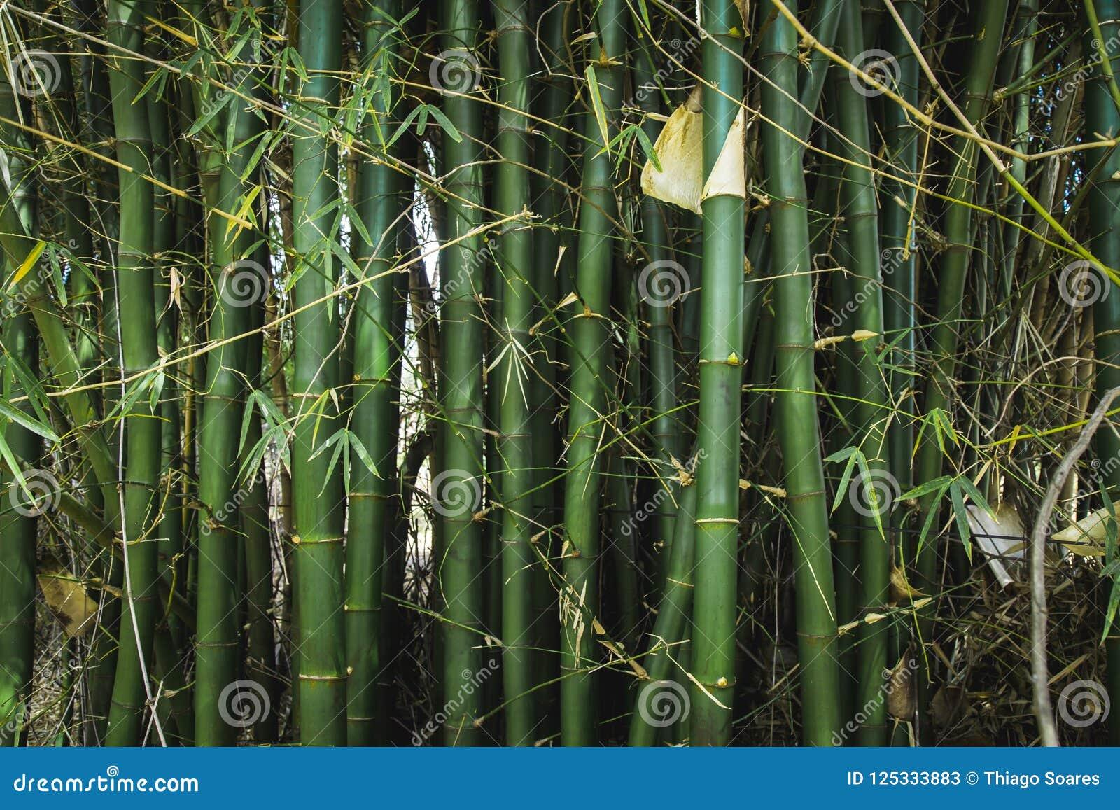 Bamboom ogród w parku z spokojną energią