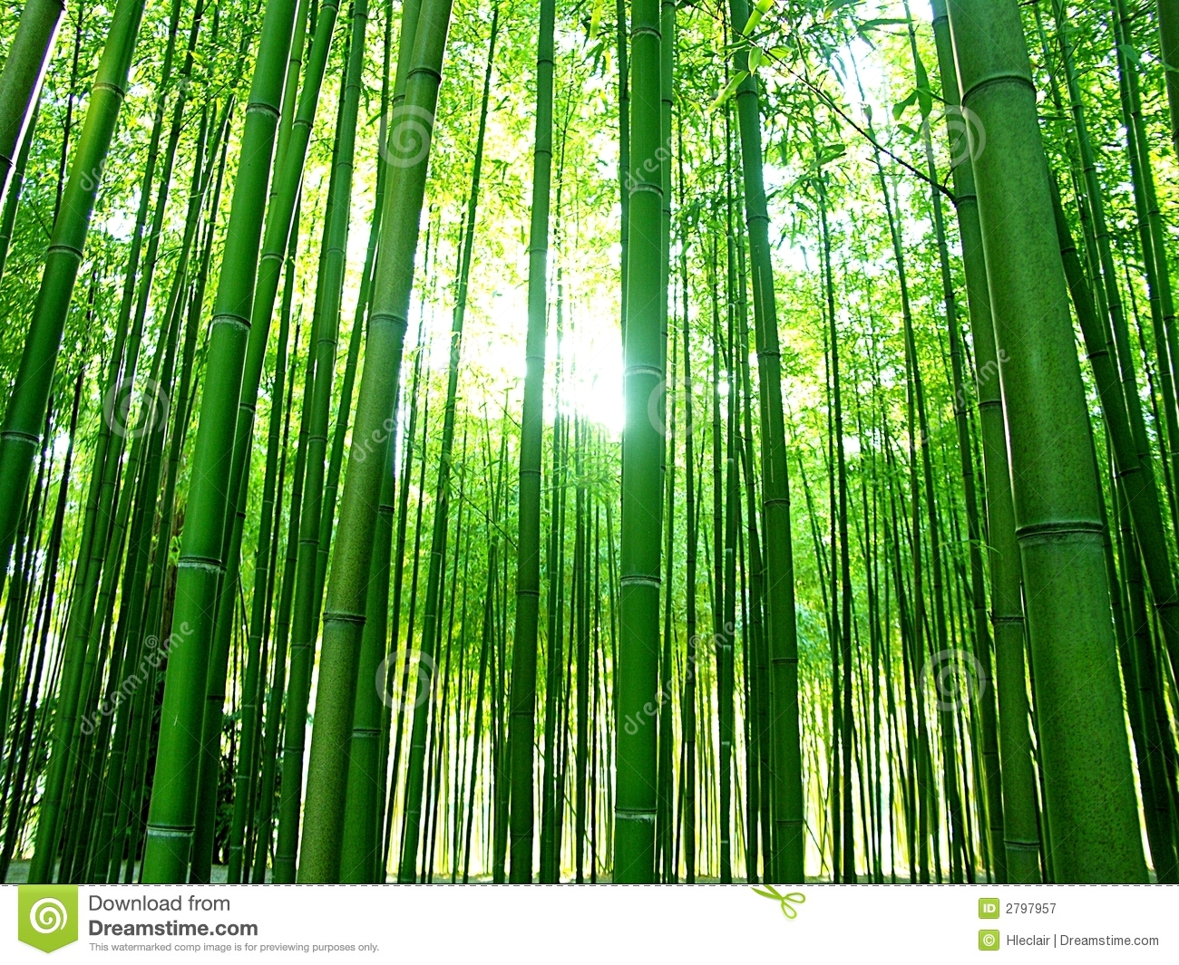 Bamboos Royalty Free Stock Photography - Image: 2797957