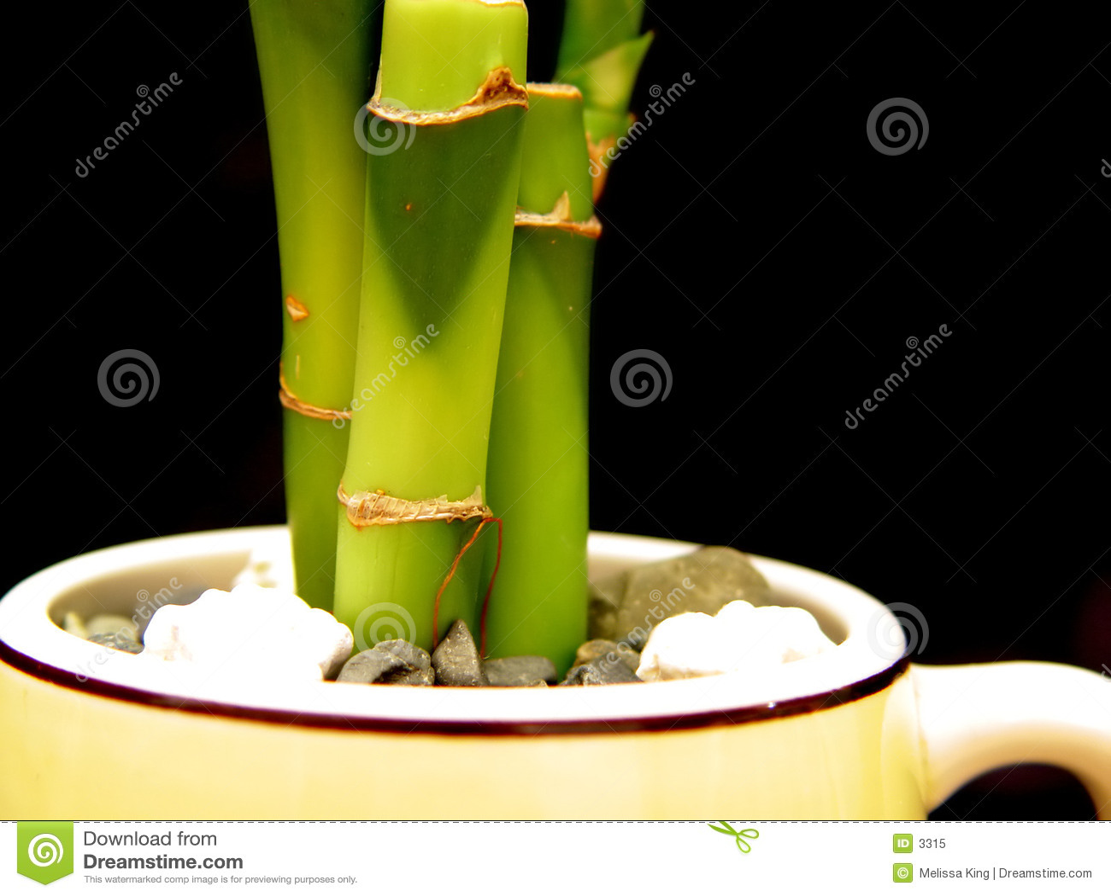 Bambou dans la cuvette