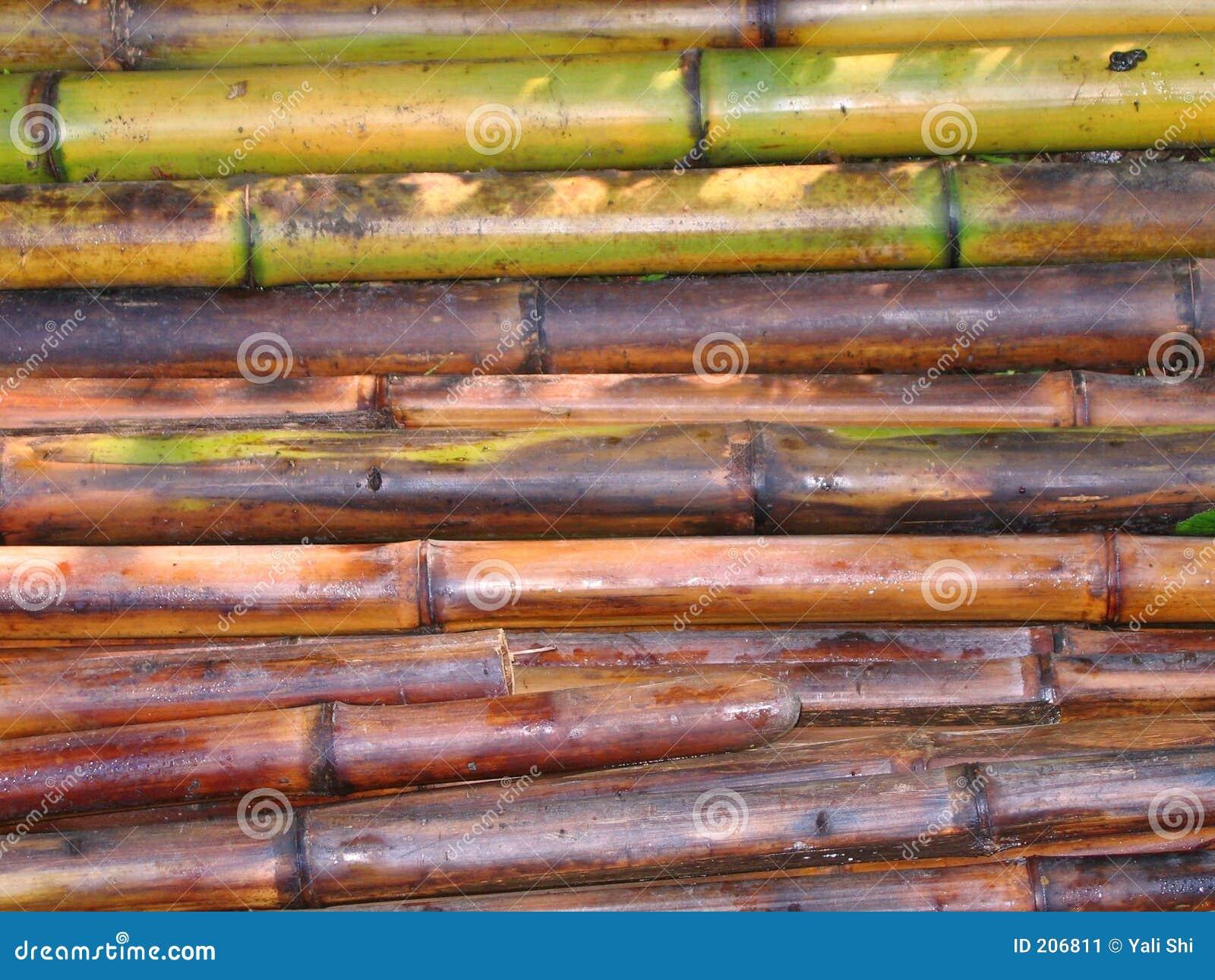 Bambu klippta nytt poler